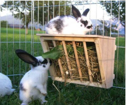 Niteangel Wooden Rabbit Hay Feeder