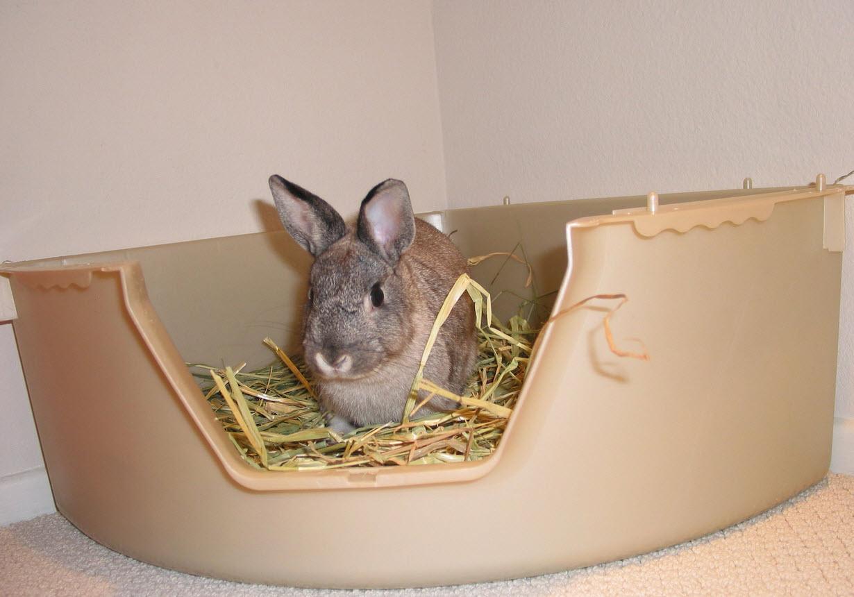 Rabbit Litter Box